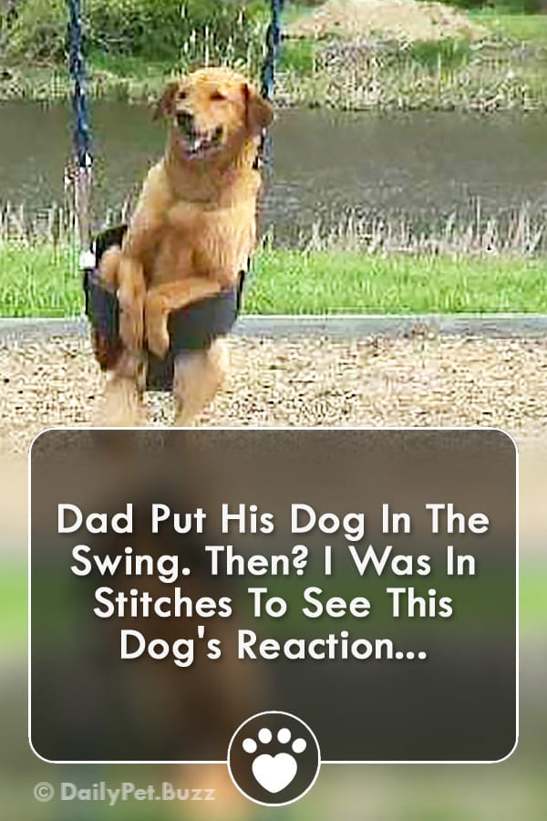 Dad Put His Dog In The Swing. Then? I Was In Stitches To See This Dog\'s Reaction...
