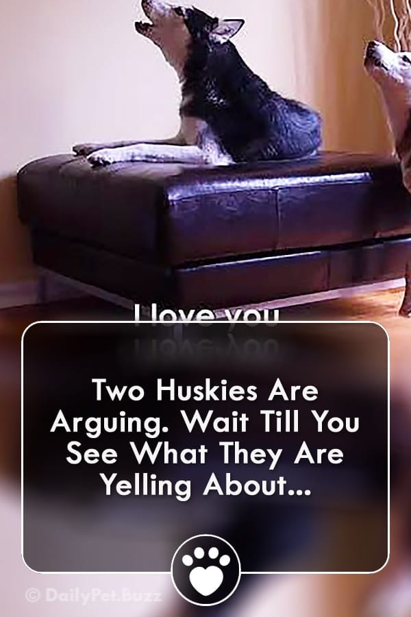Two Huskies Are Arguing. Wait Till You See What They Are Yelling About...