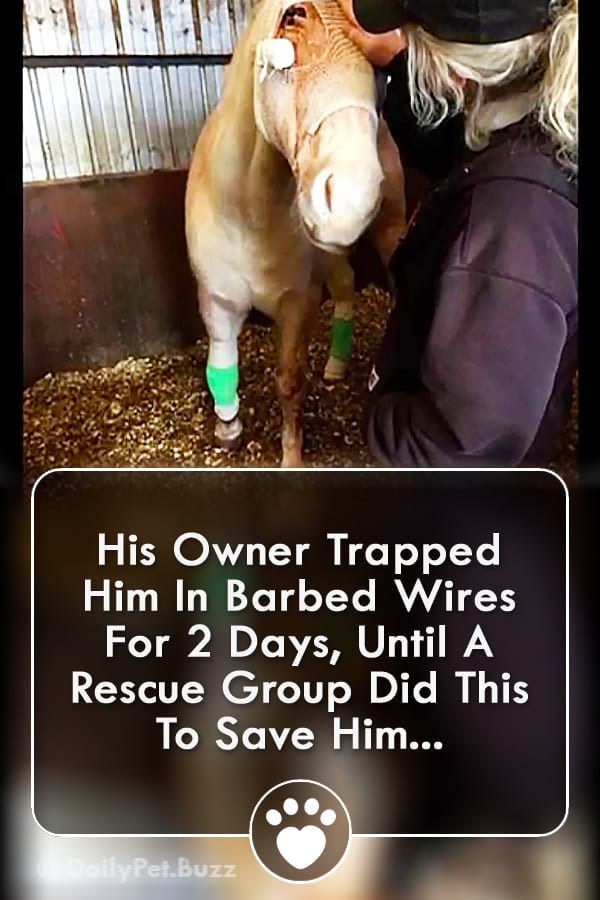 His Owner Trapped Him In Barbed Wires For 2 Days, Until A Rescue Group Did This To Save Him...