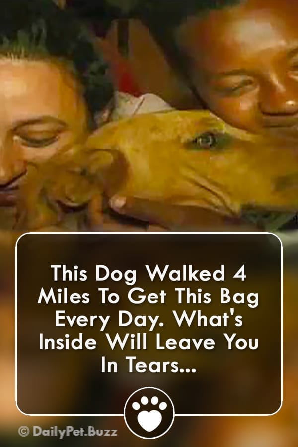 This Dog Walked 4 Miles To Get This Bag Every Day. What\'s Inside Will Leave You In Tears...