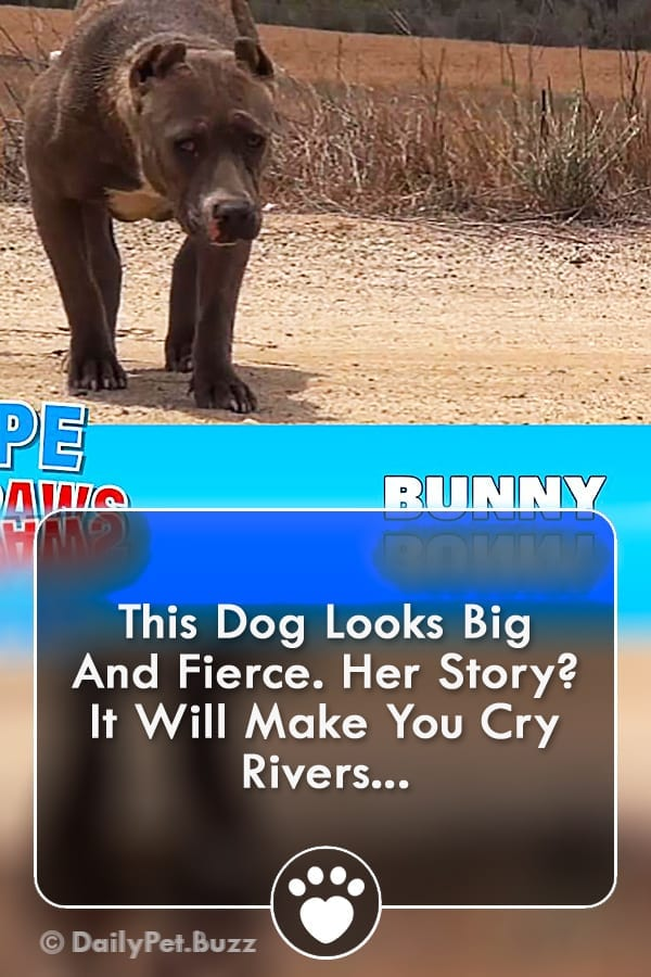 This Dog Looks Big And Fierce. Her Story? It Will Make You Cry Rivers...