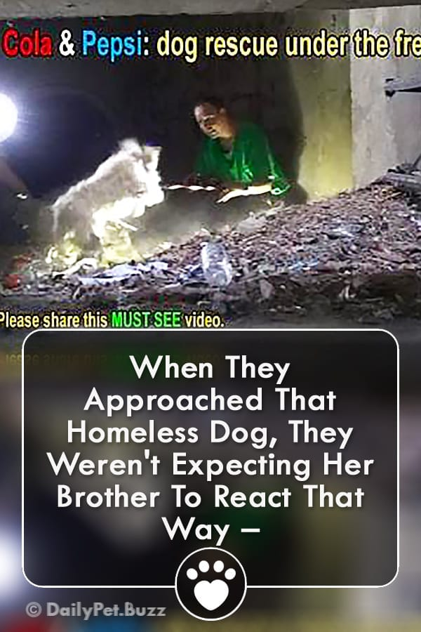 When They Approached That Homeless Dog, They Weren\'t Expecting Her Brother To React That Way –