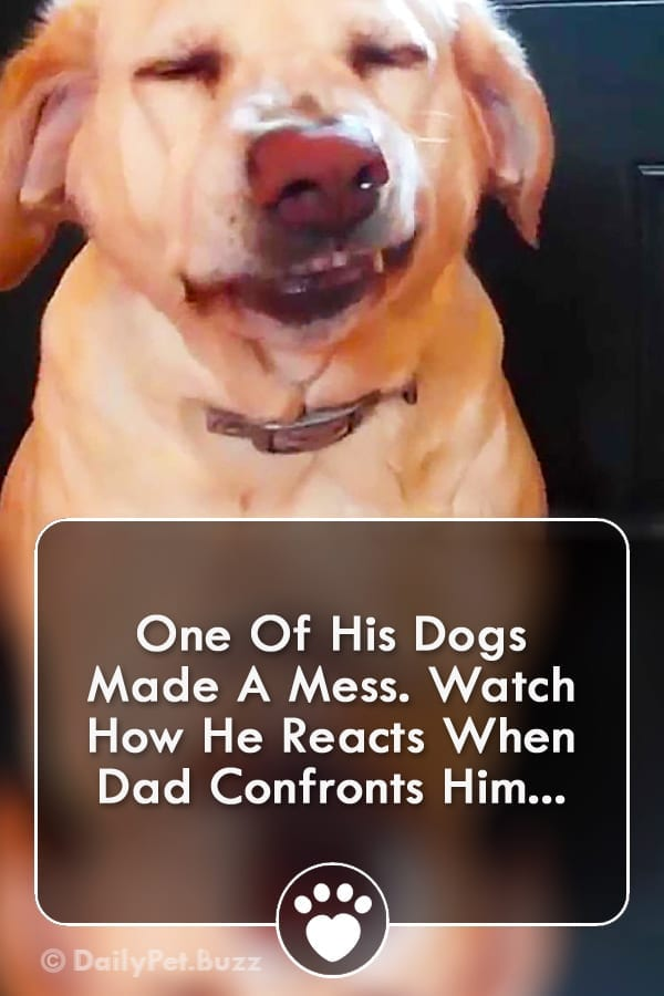 One Of His Dogs Made A Mess. Watch How He Reacts When Dad Confronts Him...