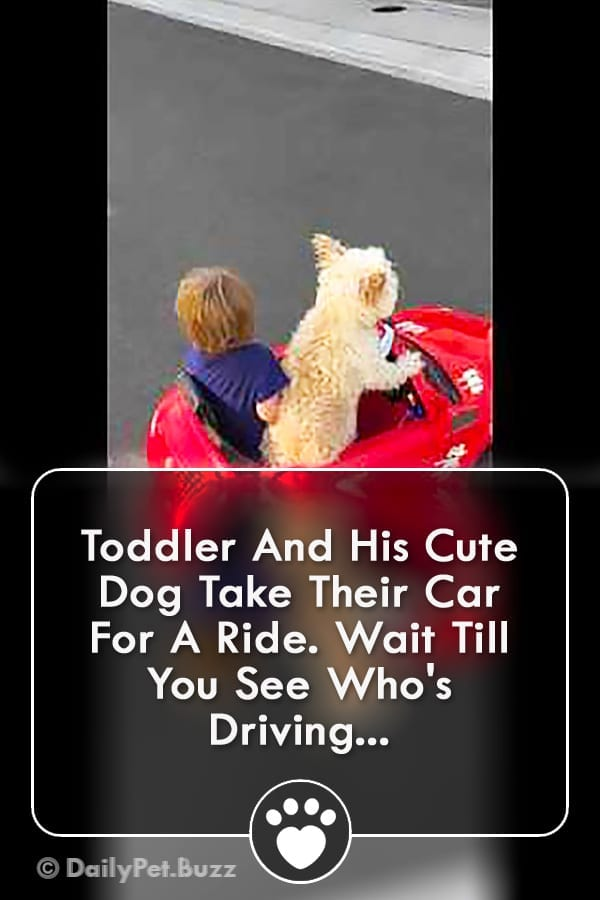 Toddler And His Cute Dog Take Their Car For A Ride. Wait Till You See Who\'s Driving...
