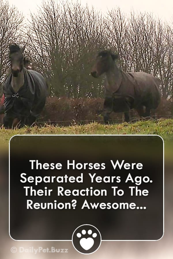 These Horses Were Separated Years Ago. Their Reaction To The Reunion? Awesome...
