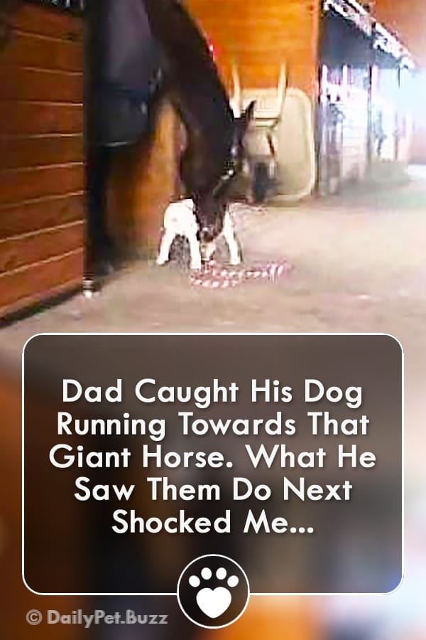 Dad Caught His Dog Running Towards That Giant Horse. What He Saw Them Do Next Shocked Me...