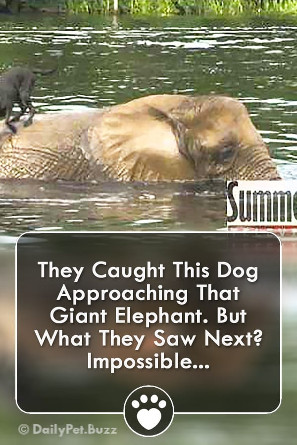 They Caught This Dog Approaching That Giant Elephant. But What They Saw Next? Impossible...