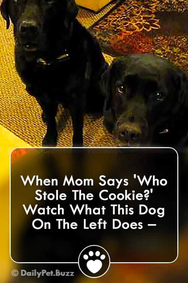 When Mom Says \'Who Stole The Cookie?\' Watch What This Dog On The Left Does –