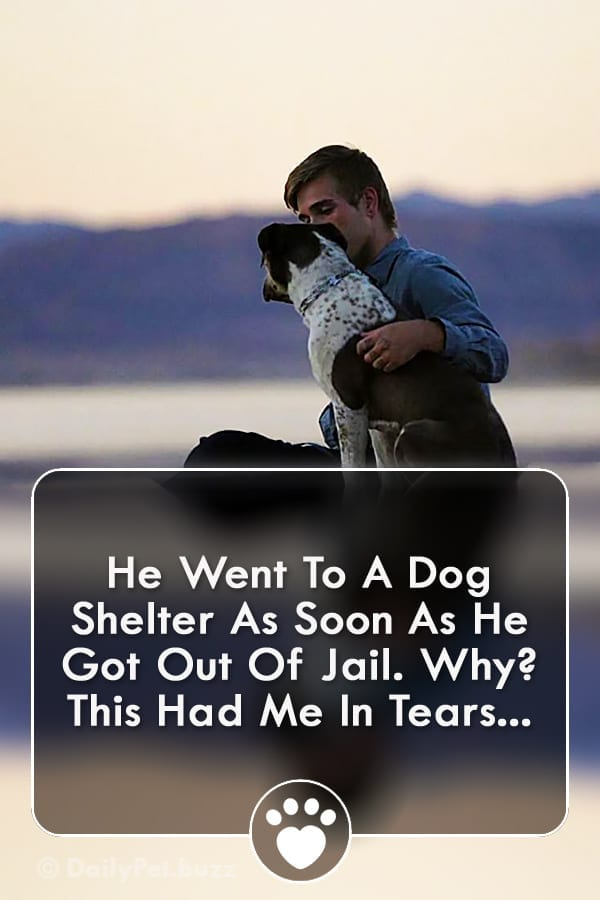 He Went To A Dog Shelter As Soon As He Got Out Of Jail. Why? This Had Me In Tears...