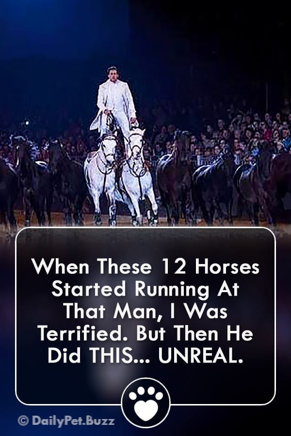 When These 12 Horses Started Running At That Man, I Was Terrified. But Then He Did THIS... UNREAL.