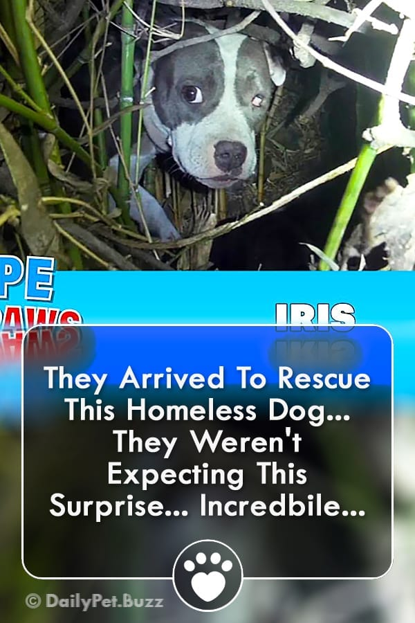 They Arrived To Rescue This Homeless Dog... They Weren\'t Expecting This Surprise... Incredbile...