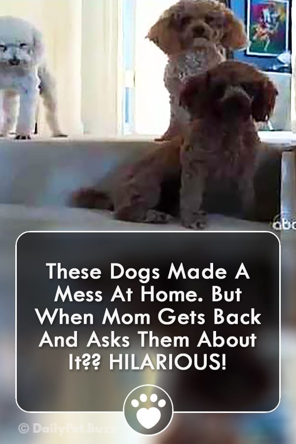 These Dogs Made A Mess At Home. But When Mom Gets Back And Asks Them About It?? HILARIOUS!