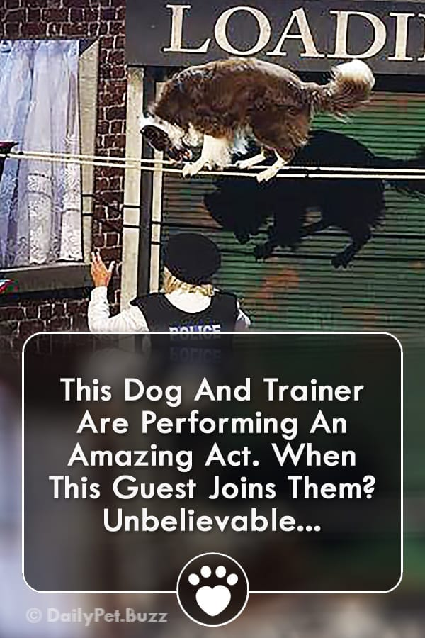This Dog And Trainer Are Performing An Amazing Act. When This Guest Joins Them? Unbelievable...