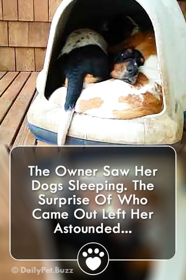 The Owner Saw Her Dogs Sleeping. The Surprise Of Who Came Out Left Her Astounded...