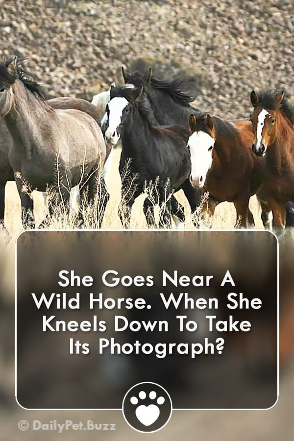 She Goes Near A Wild Horse. When She Kneels Down To Take Its Photograph?