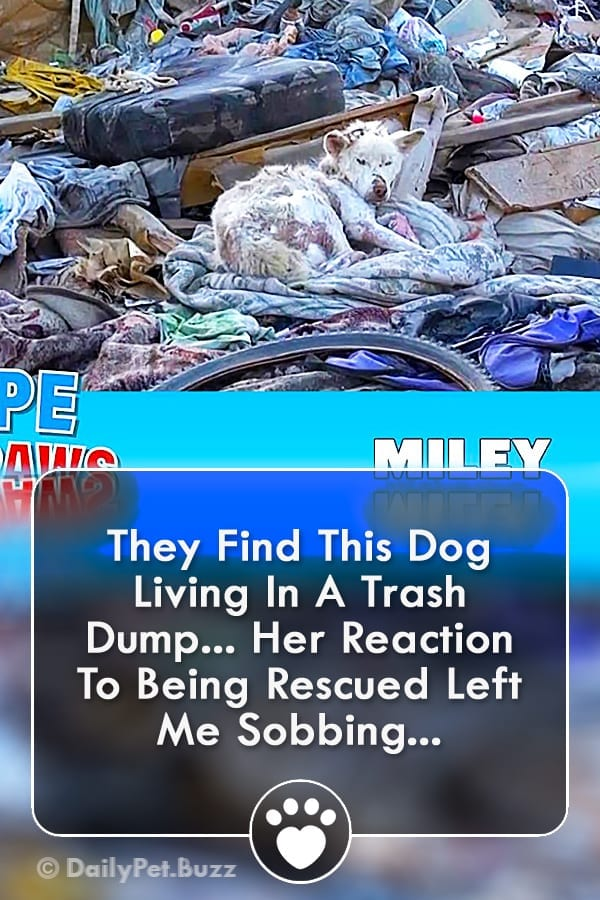 They Find This Dog Living In A Trash Dump... Her Reaction To Being Rescued Left Me Sobbing...