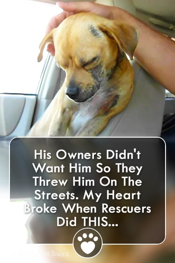 His Owners Didn\'t Want Him So They Threw Him On The Streets. My Heart Broke When Rescuers Did THIS...