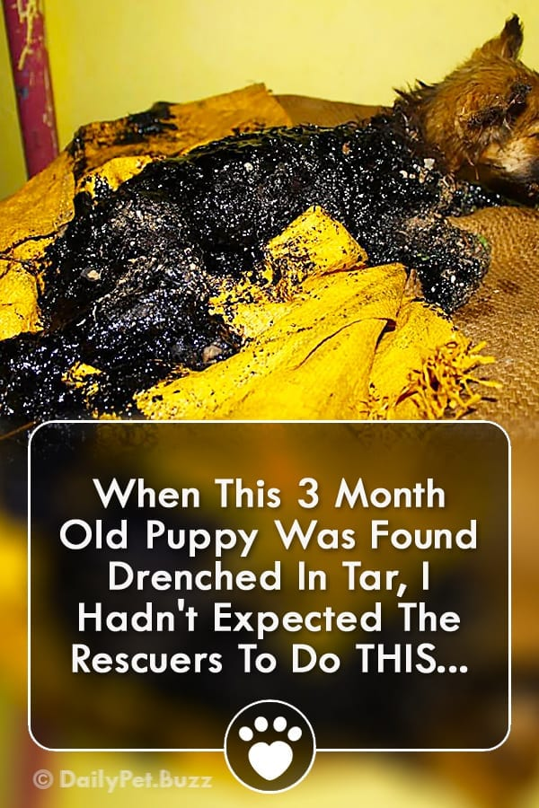 When This 3 Month Old Puppy Was Found Drenched In Tar, I Hadn\'t Expected The Rescuers To Do THIS...