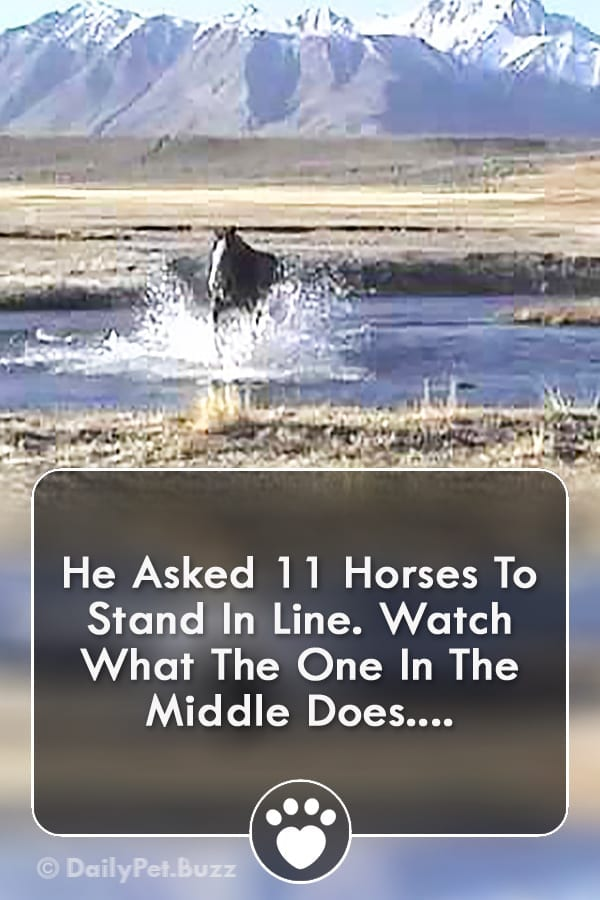He Asked 11 Horses To Stand In Line. Watch What The One In The Middle Does....