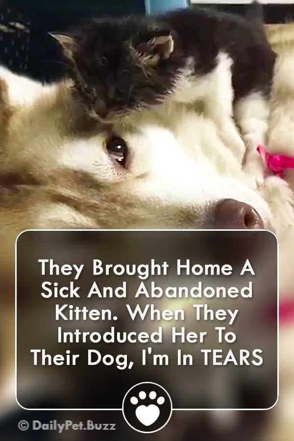 They Brought Home A Sick And Abandoned Kitten. When They Introduced Her To Their Dog, I\'m In TEARS