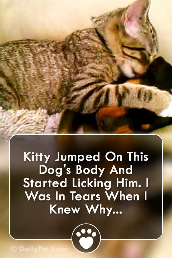 Kitty Jumped On This Dog\'s Body And Started Licking Him. I Was In Tears When I Knew Why...