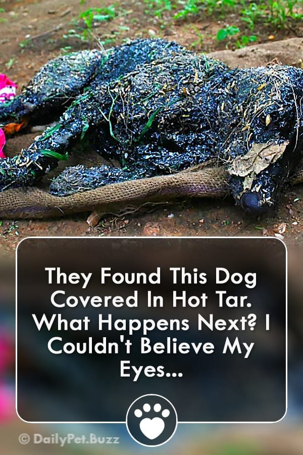 They Found This Dog Covered In Hot Tar. What Happens Next? I Couldn\'t Believe My Eyes...