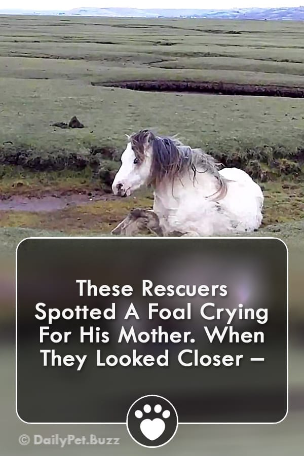 These Rescuers Spotted A Foal Crying For His Mother. When They Looked Closer –