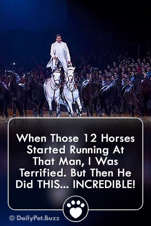 When Those 12 Horses Started Running At That Man, I Was Terrified. But Then He Did THIS... INCREDIBLE!