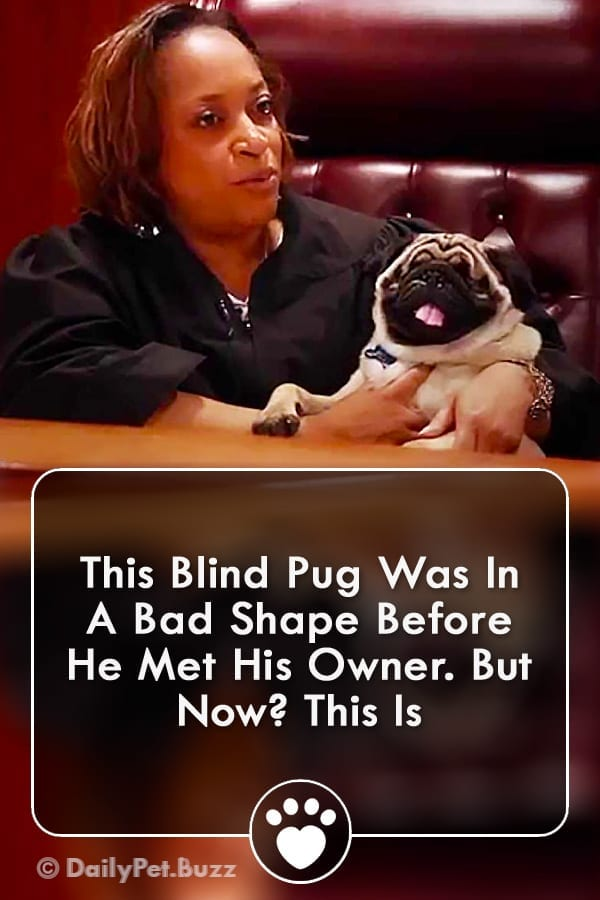 This Blind Pug Was In A Bad Shape Before He Met His Owner. But Now? This Is