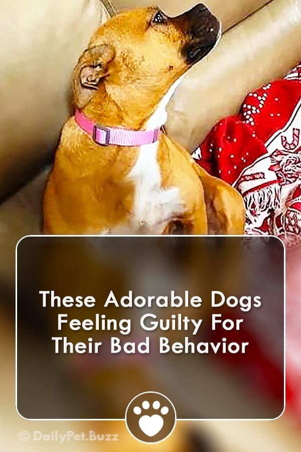 These Adorable Dogs Feeling Guilty For Their Bad Behavior