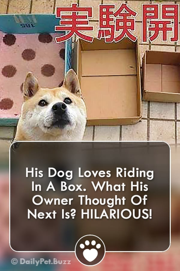His Dog Loves Riding In A Box. What His Owner Thought Of Next Is? HILARIOUS!
