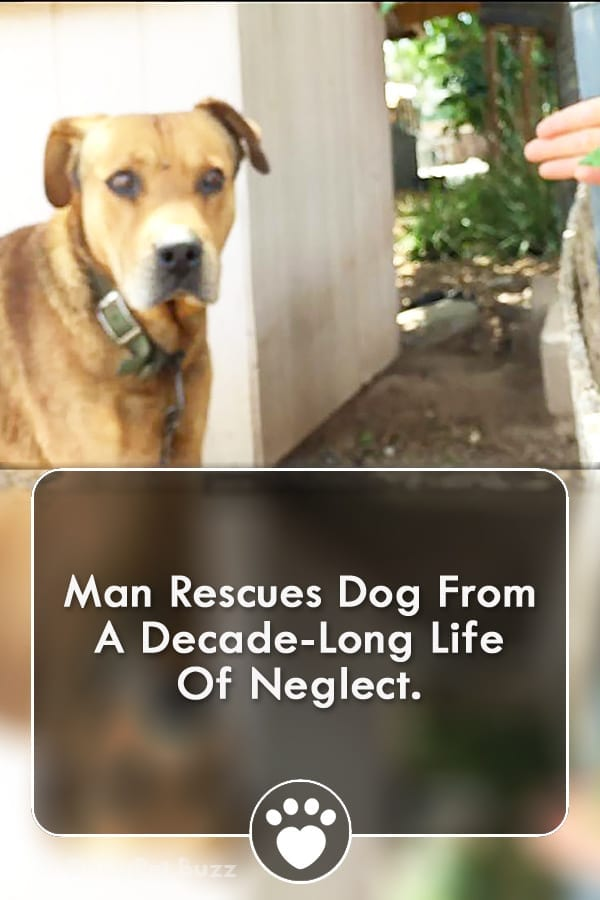 Man Rescues Dog From A Decade-Long Life Of Neglect.