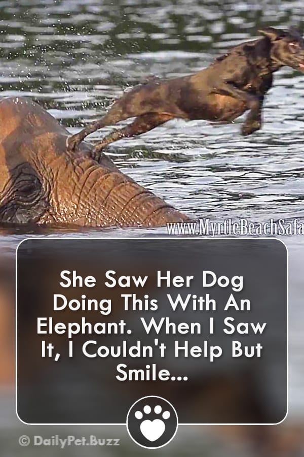 She Saw Her Dog Doing This With An Elephant. When I Saw It, I Couldn\'t Help But Smile!