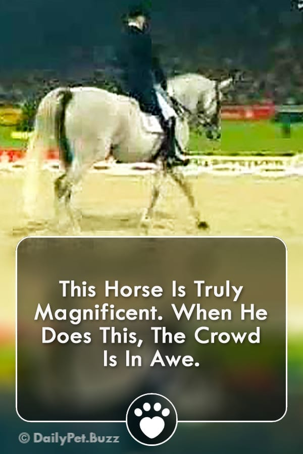This Horse Is Truly Magnificent. When He Does This, The Crowd Is In Awe.