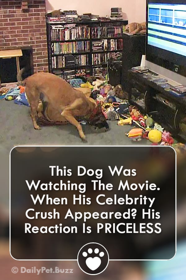 This Dog Was Watching The Movie. When His Celebrity Crush Appeared? His Reaction Is PRICELESS