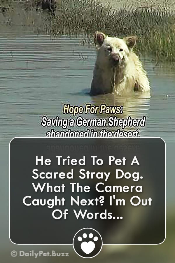 He Tried To Pet A Scared Stray Dog. What The Camera Caught Next? I\'m Out Of Words...