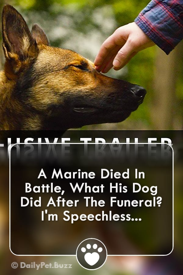A Marine Died In Battle, What His Dog Did After The Funeral? I\'m Speechless...