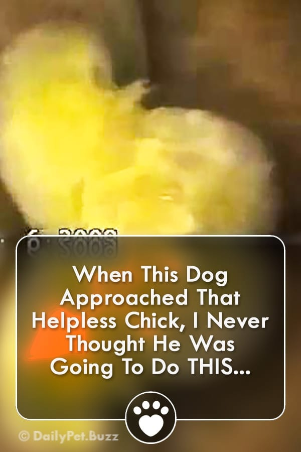 When This Dog Approached That Helpless Chick, I Never Thought He Was Going To Do THIS...