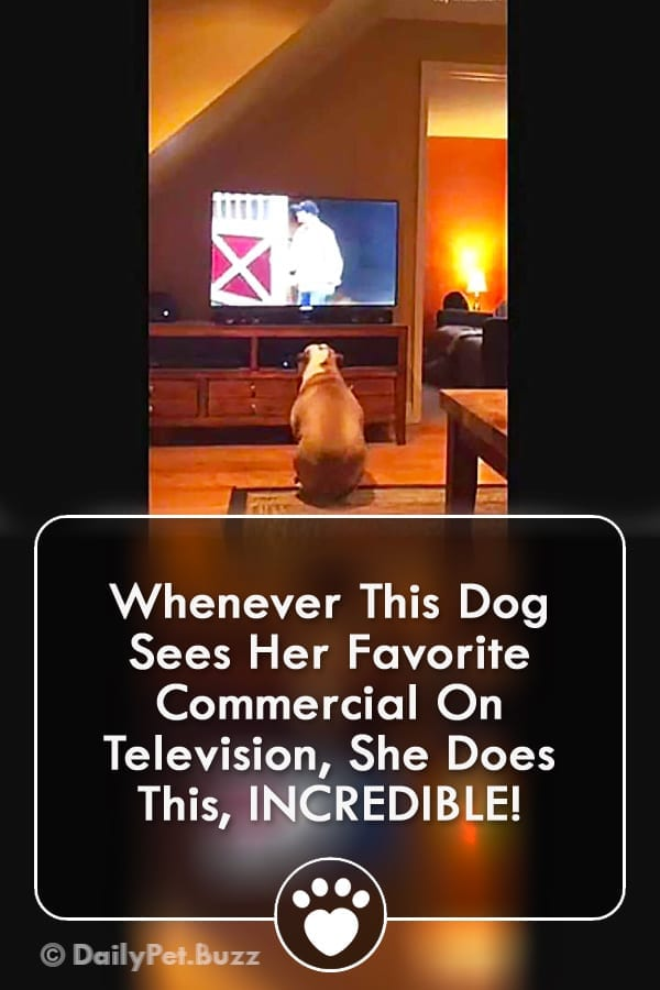 Whenever This Dog Sees Her Favorite Commercial On Television, She Does This, INCREDIBLE!