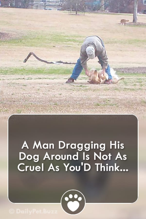 A Man Dragging His Dog Around Is Not As Cruel As You\'D Think...