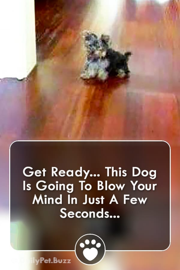 Get Ready... This Dog Is Going To Blow Your Mind In Just A Few Seconds...