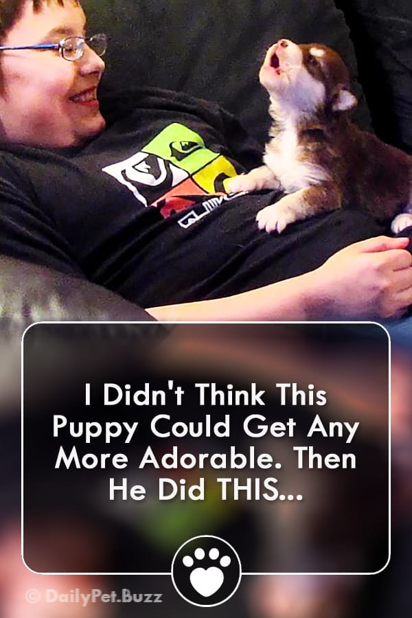 I Didn\'t Think This Puppy Could Get Any More Adorable. Then He Did THIS...