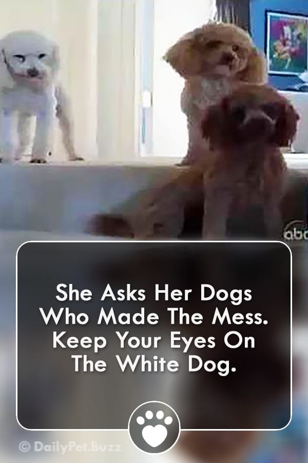 She Asks Her Dogs Who Made The Mess. Keep Your Eyes On The White Dog.
