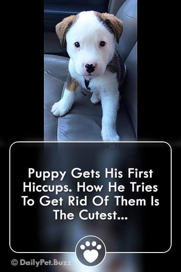 Puppy Gets His First Hiccups. How He Tries To Get Rid Of Them Is The Cutest...
