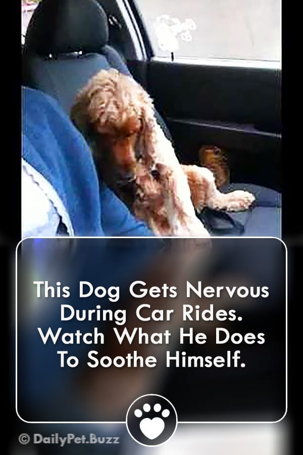 This Dog Gets Nervous During Car Rides. Watch What He Does To Soothe Himself.