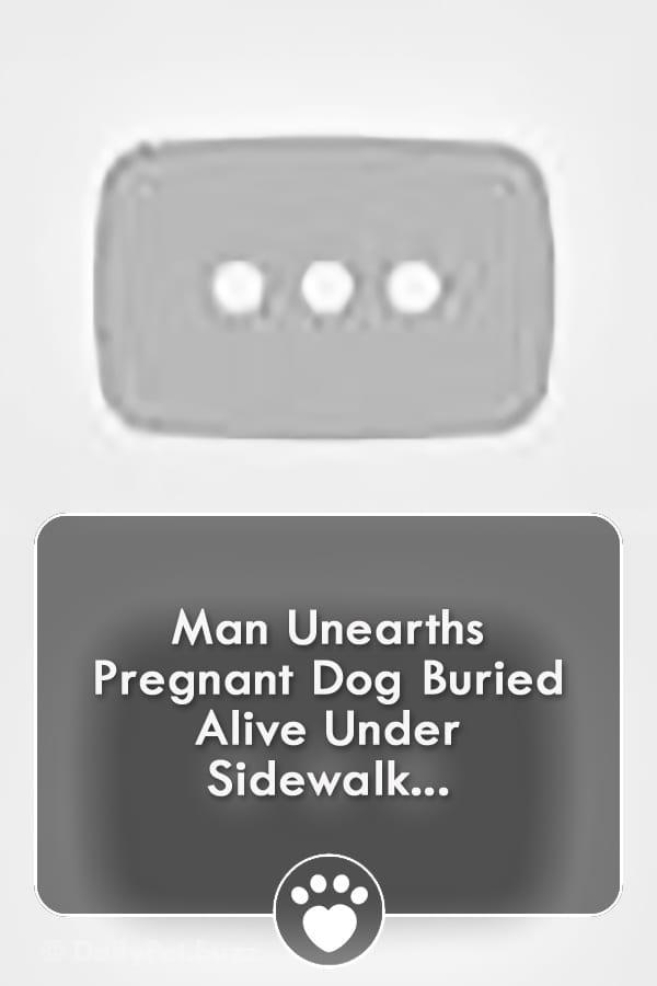 Man Unearths Pregnant Dog Buried Alive Under Sidewalk...