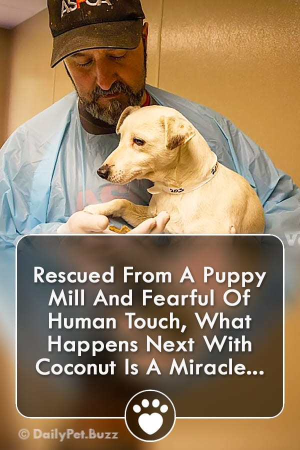 Rescued From A Puppy Mill And Fearful Of Human Touch, What Happens Next With Coconut Is A Miracle...