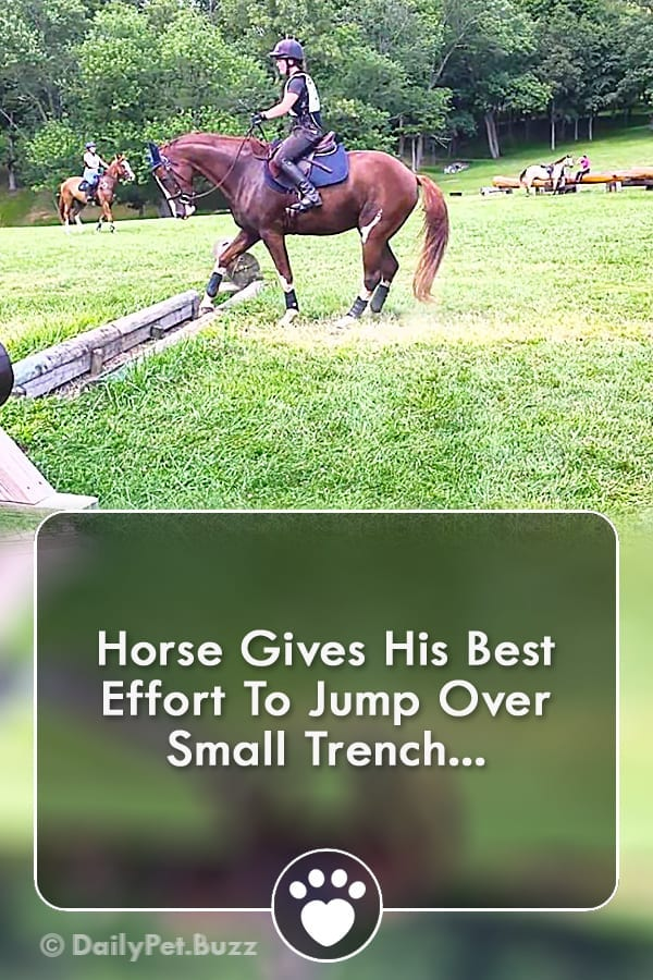 Horse Gives His Best Effort To Jump Over Small Trench...