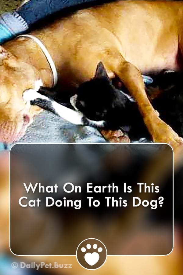 What On Earth Is This Cat Doing To This Dog?