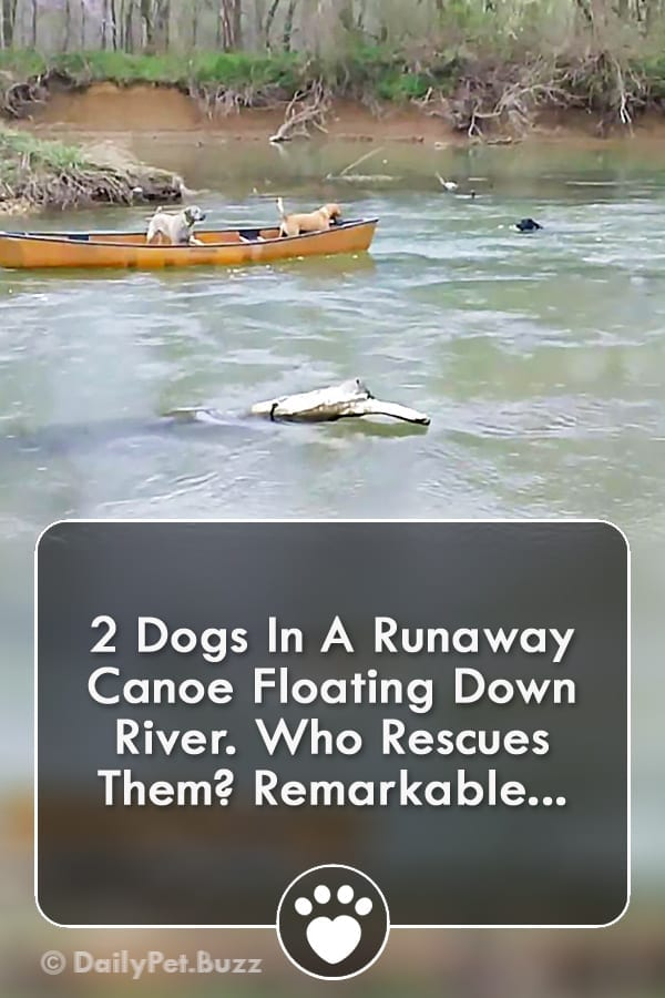 2 Dogs In A Runaway Canoe Floating Down River. Who Rescues Them? Remarkable...